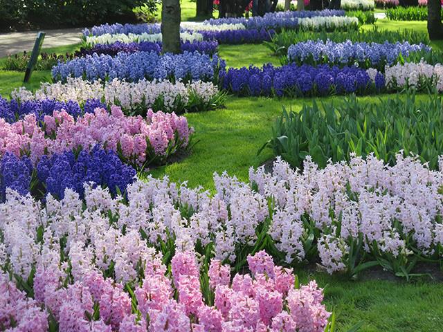 Keukenhof - Thiên đường của các loài hoa - Ảnh 17.