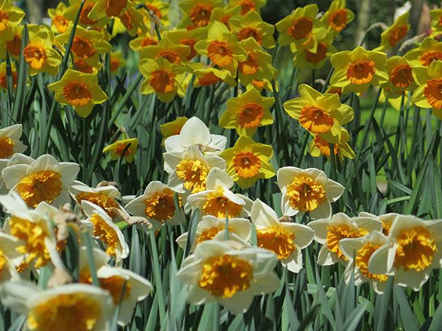 Keukenhof - Thiên đường của các loài hoa - Ảnh 19.
