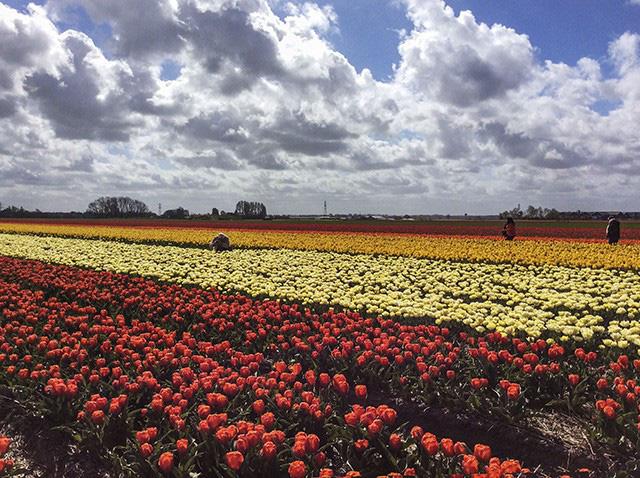 Keukenhof - Thiên đường của các loài hoa - Ảnh 6.