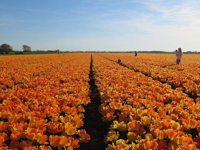 Keukenhof - Thiên đường của các loài hoa - Ảnh 9.
