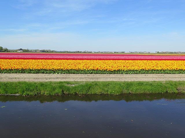 Keukenhof - Thiên đường của các loài hoa - Ảnh 10.