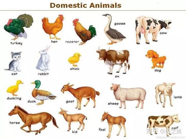Tại sao nhân loại không thuần hóa hổ hay sư tử để làm gia súc hay thú cưỡi? - Ảnh 1.