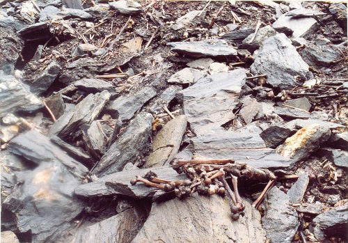 Thiên nhiên kỳ bí: Bí mật vùng đất chứa 800 bộ hài cốt và loài nấm ma thuật kinh dị nhất mọi thời đại - Ảnh 1.