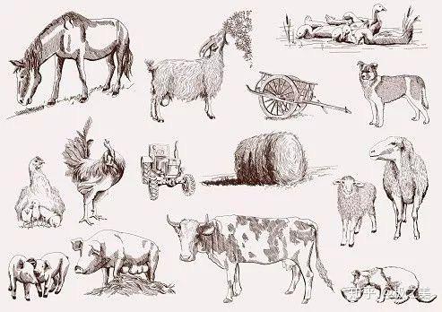 Tại sao nhân loại không thuần hóa hổ hay sư tử để làm gia súc hay thú cưỡi? - Ảnh 13.