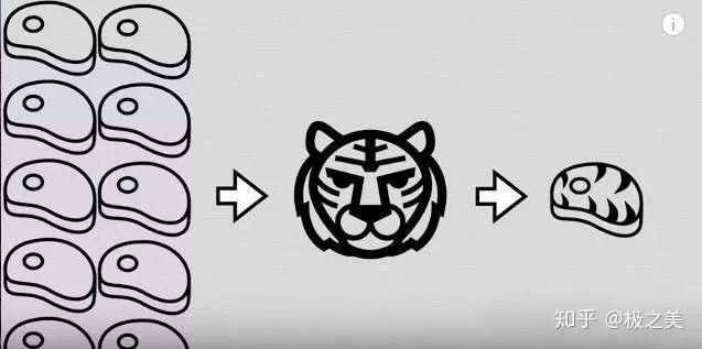 Tại sao nhân loại không thuần hóa hổ hay sư tử để làm gia súc hay thú cưỡi? - Ảnh 5.
