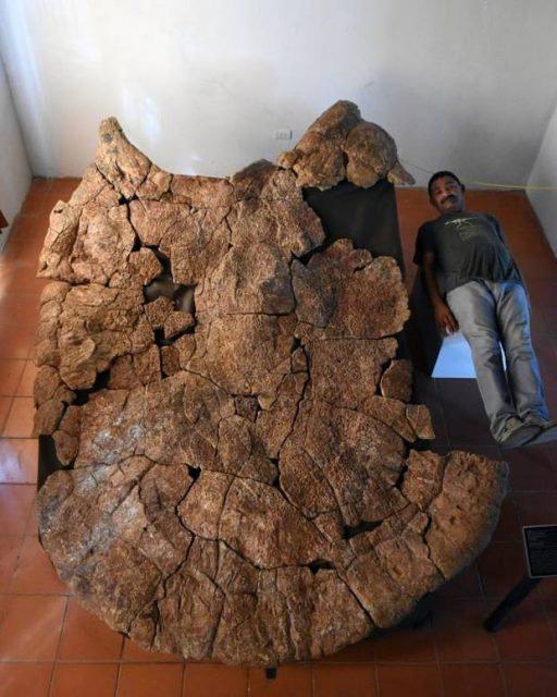 Nhà cổ sinh vật học Marcelo Sánchez và hóa thạch vỏ mai rùa Stupendemys.