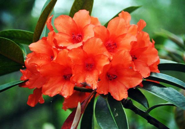 Nhiều loài hoa dại thành bonsai trăm triệu ở Đà Lạt - Ảnh 1.