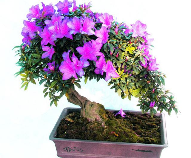 Nhiều loài hoa dại thành bonsai trăm triệu ở Đà Lạt - Ảnh 2.