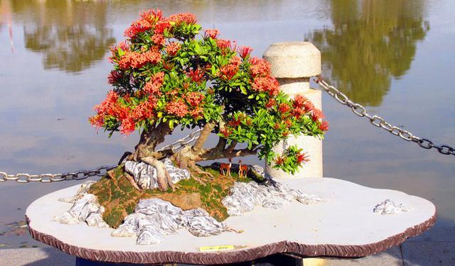 Nhiều loài hoa dại thành bonsai trăm triệu ở Đà Lạt - Ảnh 4.
