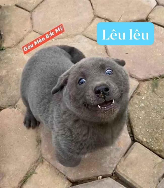 Dân mạng ngỡ ngàng phát hiện chú chó Dúi idol có em sinh đôi, thần thái giống hệt Dúi chỉ khác mỗi màu lông và mắt không bị lé - ảnh 1