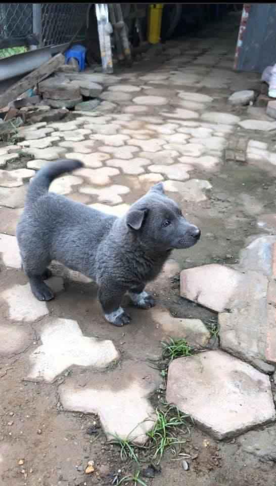 Dân mạng ngỡ ngàng phát hiện chú chó Dúi idol có em sinh đôi, thần thái giống hệt Dúi chỉ khác mỗi màu lông và mắt không bị lé - ảnh 2
