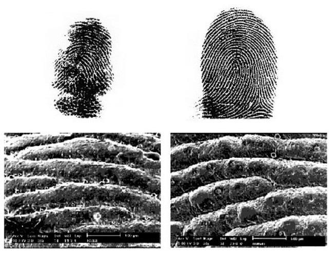 1001 thắc mắc: Loài vật nào cũng có dấu vân tay như con người? - Ảnh 1.