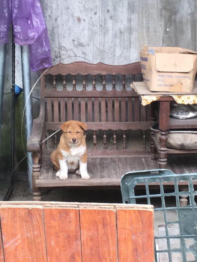 Dân mạng ngỡ ngàng phát hiện chú chó Dúi idol có em sinh đôi, thần thái giống hệt Dúi chỉ khác mỗi màu lông và mắt không bị lé - ảnh 7