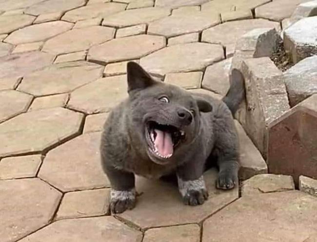 Dân mạng ngỡ ngàng phát hiện chú chó Dúi idol có em sinh đôi, thần thái giống hệt Dúi chỉ khác mỗi màu lông và mắt không bị lé - ảnh 8