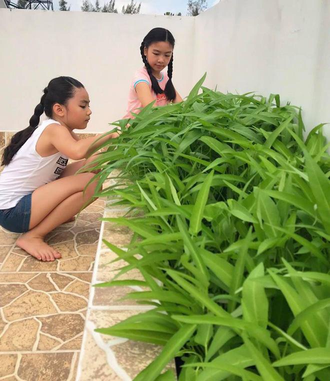 Bà xã Quyền Linh khoe thành quả thu hoạch hoa trái sai trĩu trong căn biệt thự 21 tỷ, được cả chồng lẫn 2 cô con gái xinh đẹp phụ giúp - Ảnh 13.