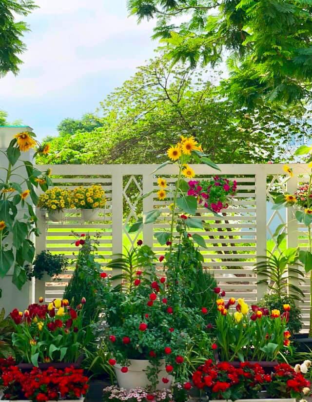 Bà xã Quyền Linh khoe thành quả thu hoạch hoa trái sai trĩu trong căn biệt thự 21 tỷ, được cả chồng lẫn 2 cô con gái xinh đẹp phụ giúp - ảnh 5