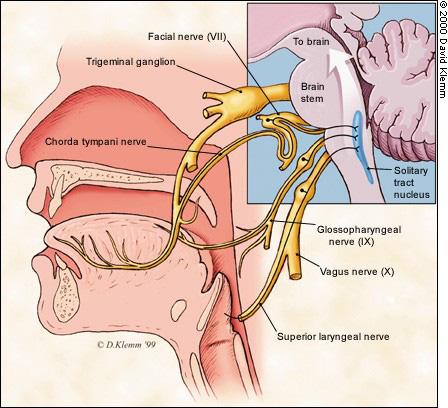 Mất khứu giác và vị giác có thể là triệu chứng của Covid-19: Điều đó xảy ra như thế nào? - Ảnh 2.