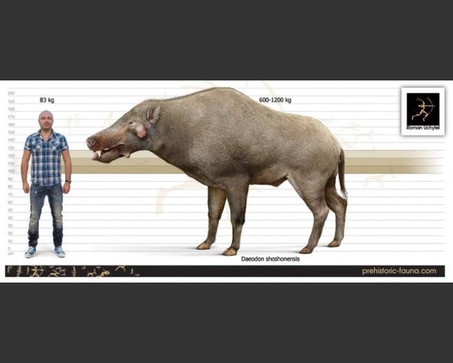 Loài lợn khổng lồ cổ đại: Kẻ khủng bố của Bắc Mỹ thời tiền sử - Ảnh 4.