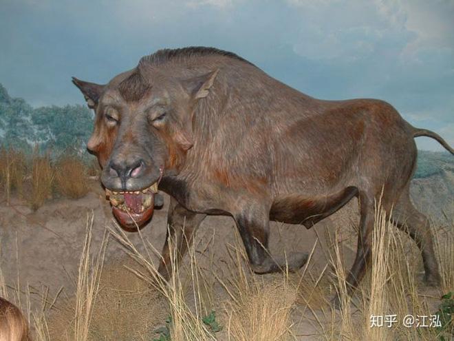 Loài lợn khổng lồ cổ đại: Kẻ khủng bố của Bắc Mỹ thời tiền sử - Ảnh 6.