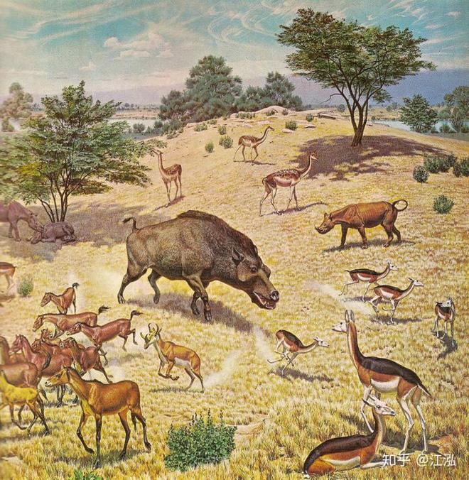 Loài lợn khổng lồ cổ đại: Kẻ khủng bố của Bắc Mỹ thời tiền sử - Ảnh 9.