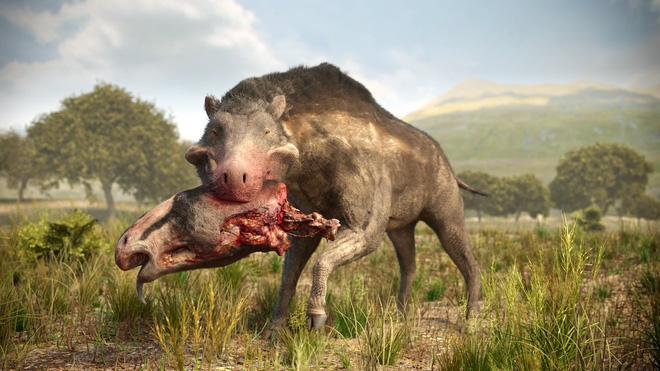 Loài lợn khổng lồ cổ đại: Kẻ khủng bố của Bắc Mỹ thời tiền sử - Ảnh 11.
