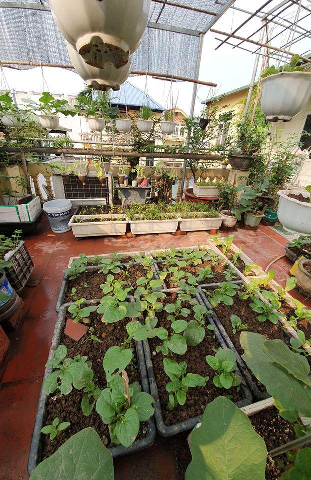 Ở nhà tránh dịch mới vài ngày, hội chị em đã bắt đầu đua nhau khoe vườn rau tại nhà, quả trĩu cành - ảnh 17