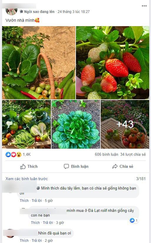 Ở nhà tránh dịch mới vài ngày, hội chị em đã bắt đầu đua nhau khoe vườn rau tại nhà, quả trĩu cành - ảnh 7