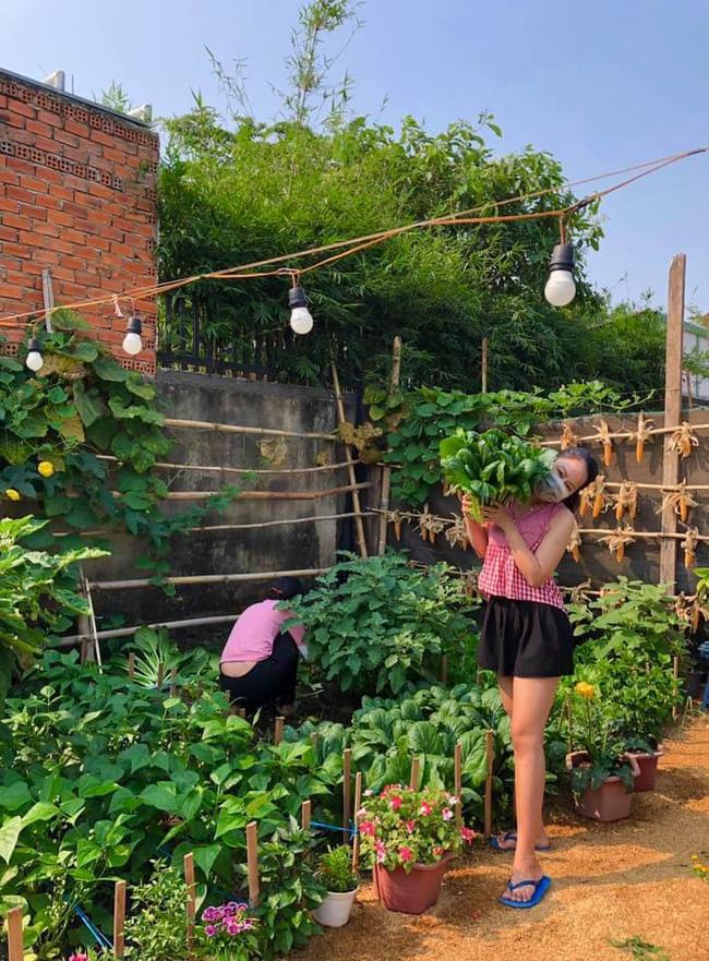 Ở nhà tránh dịch mới vài ngày, hội chị em đã bắt đầu đua nhau khoe vườn rau tại nhà, quả trĩu cành - ảnh 8