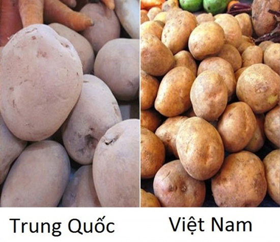 Tuyệt chiêu để phân biệt rau củ Trung Quốc và Việt Nam cho các bà nội trợ - Ảnh 9.