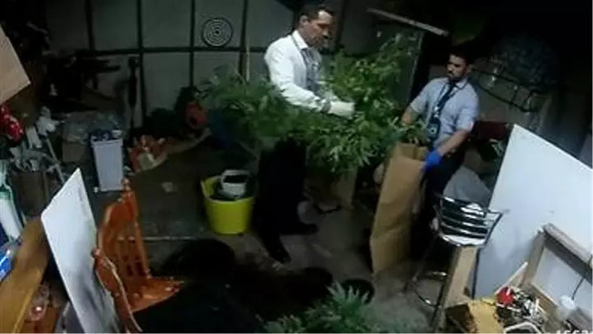 Cô bé 5 tuổi gọi điện để chơi khăm cảnh sát, vô tình làm lộ vườn cây cần sa của mẹ - Ảnh 1.
