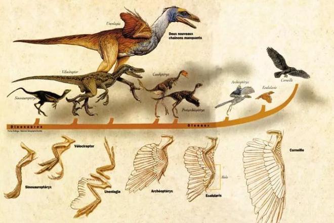 Tại sao côn trùng từ bỏ cơ thể to lớn thời tiền sử của chúng mà ngày càng thu nhỏ dần? - Ảnh 4.