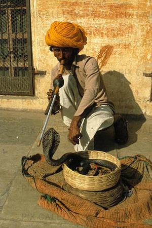 1001 thắc mắc: Vì sao rắn không có tai lại nghe được con người trò chuyện? - Ảnh 1.