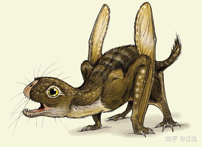 Luôn treo mình lộn ngược trên cây như loài dơi, đây nhất định là loài thằn lằn bay cổ đại kỳ lạ nhất từng tồn tại ở Trung Quốc - Ảnh 10.