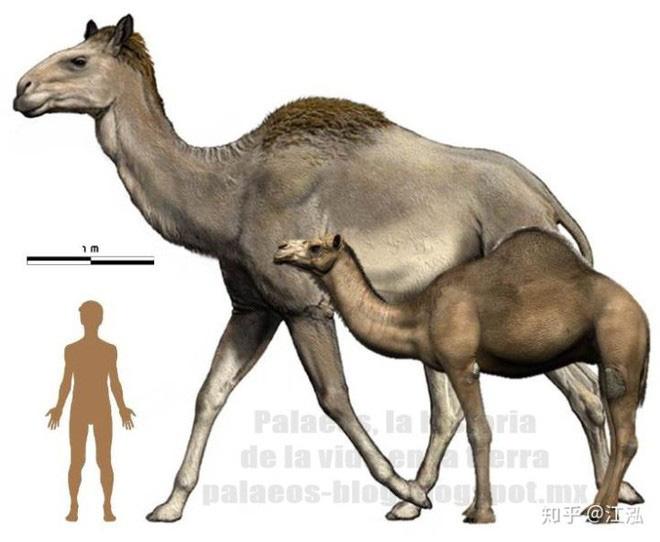 Sự tuyệt chủng của những loài động vật có vú lớn tại Bắc Mỹ đã mang tới hậu quả gì? - Ảnh 5.