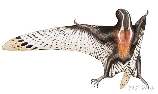 Luôn treo mình lộn ngược trên cây như loài dơi, đây nhất định là loài thằn lằn bay cổ đại kỳ lạ nhất từng tồn tại ở Trung Quốc - Ảnh 7.