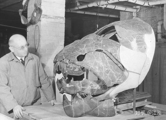 Loài cá Dunkleosteus: Kẻ hủy diệt của kỷ Devon - Ảnh 1.