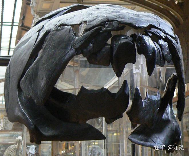 Loài cá Dunkleosteus: Kẻ hủy diệt của kỷ Devon - Ảnh 2.