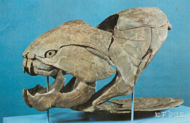 Loài cá Dunkleosteus: Kẻ hủy diệt của kỷ Devon - Ảnh 4.