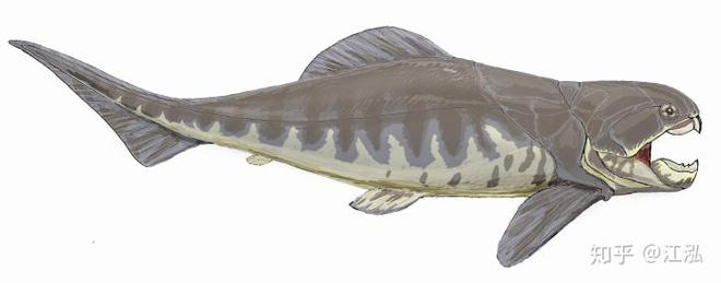 Loài cá Dunkleosteus: Kẻ hủy diệt của kỷ Devon - Ảnh 6.