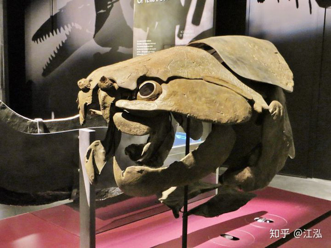 Loài cá Dunkleosteus: Kẻ hủy diệt của kỷ Devon - Ảnh 8.
