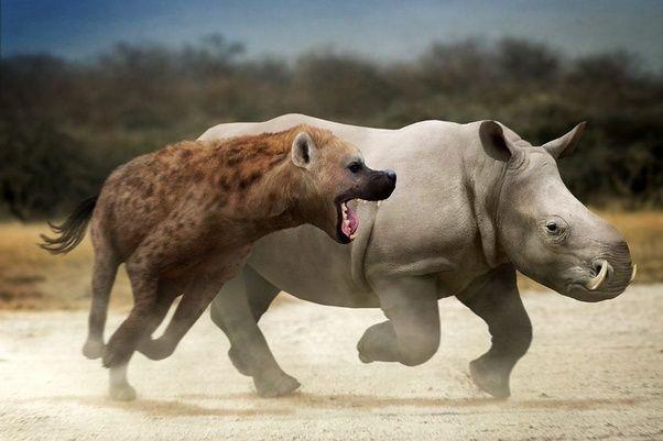 5 loài động vật thời tiền sử chuyên săn lùng tổ tiên của chúng ta - Ảnh 3.