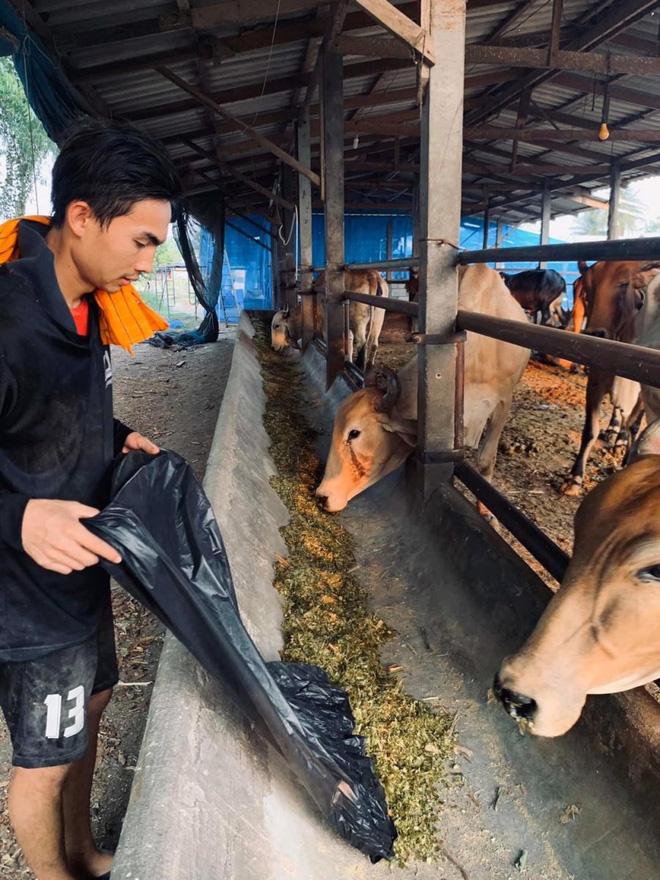 Thai League tạm hoãn vì Covid-19, cầu thủ U23 Thái Lan về quê nuôi bò phụ gia đình, HLV bán bánh mì kiếm sống qua ngày - Ảnh 1.