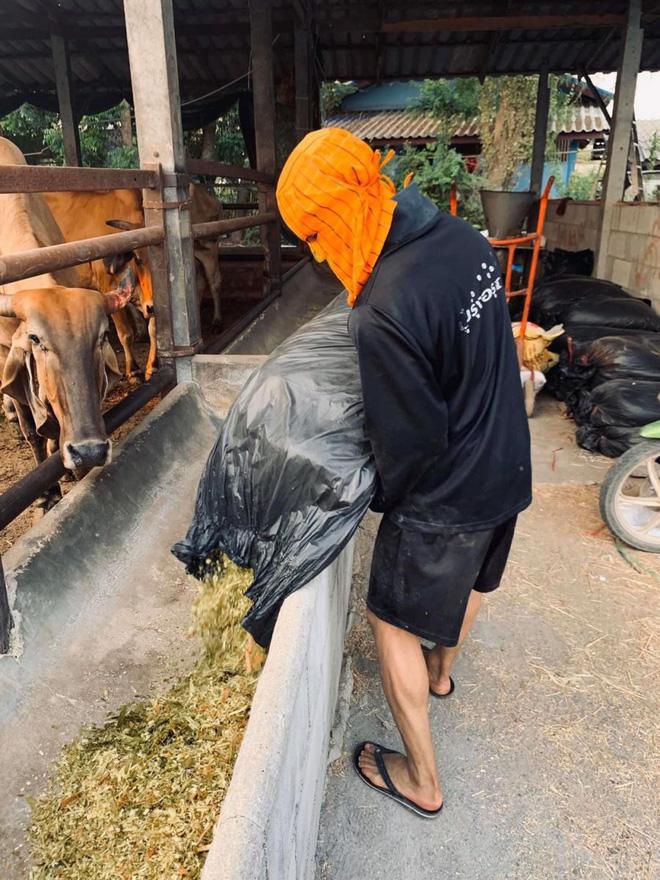 Thai League tạm hoãn vì Covid-19, cầu thủ U23 Thái Lan về quê nuôi bò phụ gia đình, HLV bán bánh mì kiếm sống qua ngày - Ảnh 2.