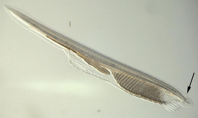 Tại sao một số sinh vật trở thành hóa thạch sống? - Ảnh 3.