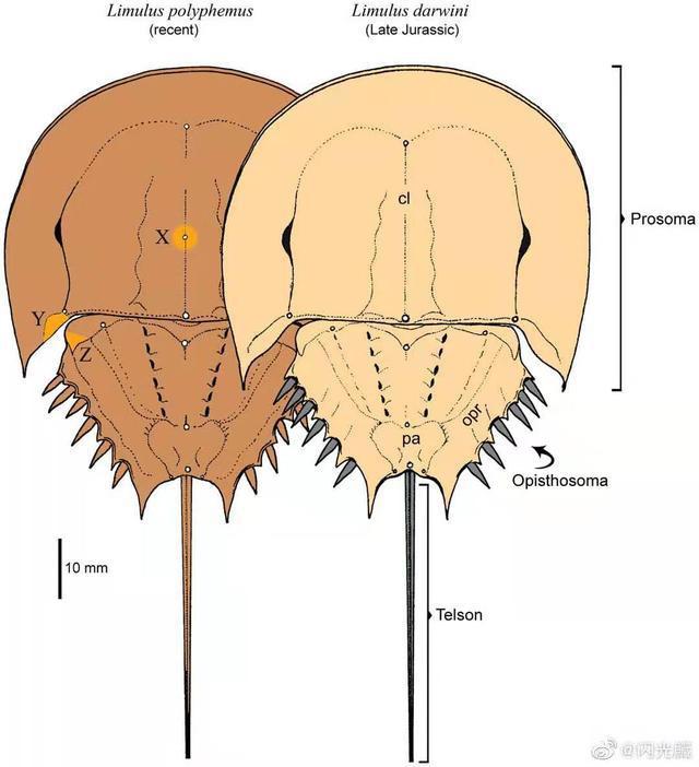 Tại sao một số sinh vật trở thành hóa thạch sống? - Ảnh 5.