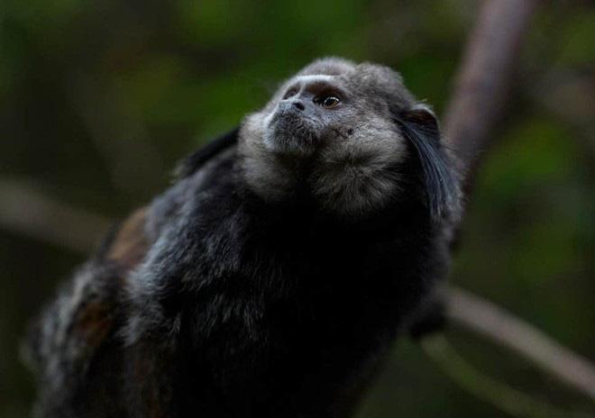 Phát hiện chấn động: Đàn khỉ dùng bè vượt gần 1500km qua Đại Tây Dương để tới Nam Mỹ 34 triệu năm trước - Ảnh 1.