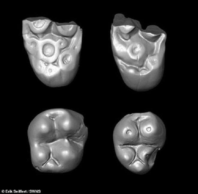 Phát hiện chấn động: Đàn khỉ dùng bè vượt gần 1500km qua Đại Tây Dương để tới Nam Mỹ 34 triệu năm trước - Ảnh 2.