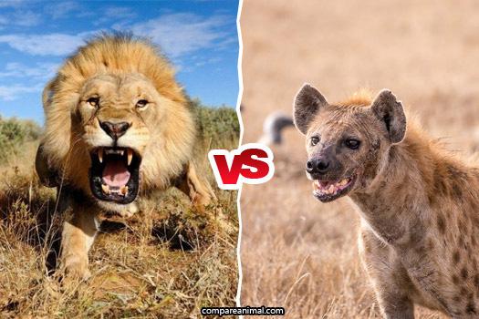 Mắc phải sai lầm lớn nhất đời, linh cẩu đem tính mạng ra để trả giá cho sự chủ quan - Ảnh 2.