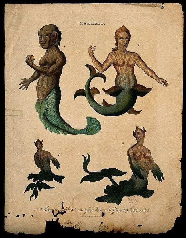 Không phải truyền thuyết, nơi trú ngụ của nàng tiên cá thật được hé lộ - Ảnh 2.