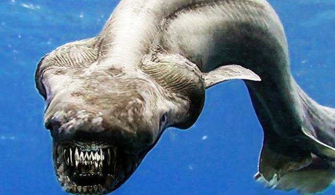 Phát hiện cá mập mình rắn 80 triệu tuổi vẫn còn sống! - ảnh 1